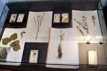 Открытие выставки к году экологии_3
